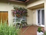10 týdnů po instalaci živé stěny Minigarden