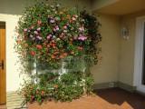 12 týdnů po instalaci živé stěny Minigarden