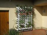 6 týdnů po instalaci živé stěny Minigarden
